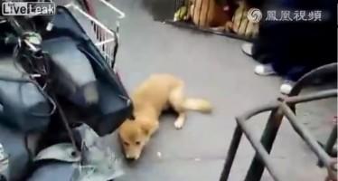 Κινέζος τυραννάει ζώα μπροστά σε κόσμο για να τα πουλήσει (βίντεο)