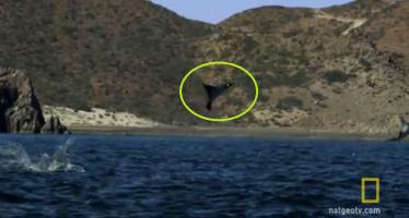 Σαλάχια πετάνε στον αέρα σαν πουλιά (βίντεο)