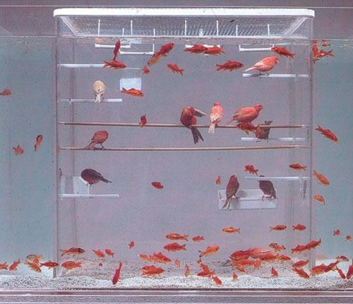 πουλιά και ψάρια μαζί