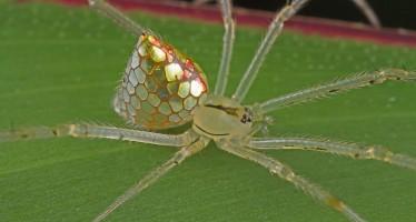 Η πιο εντυπωσιακή αράχνη που έχεις δει (εικόνες)