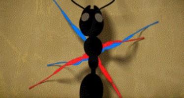 Έχεις δει πως περπατάει το μυρμήγκι; (3 Επιστημονικά Gif)