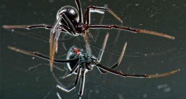 Αυτές είναι οι 10 πιο Τρομακτικές αράχνες!