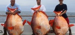 VIDEO: Δες τι έπιασαν ψαράδες στην νότια Καλιφόρνια!
