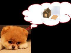 DIY: Πώς να φτιάξεις εύκολα ένα σπιτάκι σκύλου!