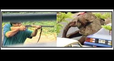 ΣΚΛΗΡΕΣ ΕΙΚΟΝΕΣ: Βίντεο της Peta για την αιχμαλωσία των ζώων!