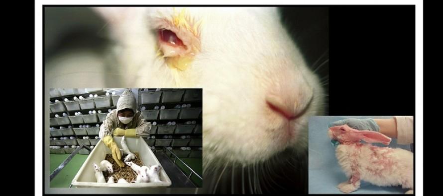 Σοκαριστικό video από την Peta για το Animal Testing!