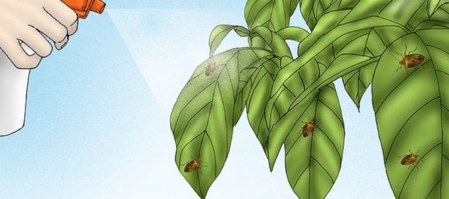 Πως να ξεφορτωθείς με φυσικό τρόπο τις κατσαρίδες!