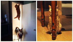 Αυτές είναι οι 20 πιο έξυπνες φωτογραφίες με γάτες!