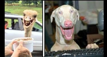 15+1 Αστείες εικόνες με έκπληκτα ζώα!