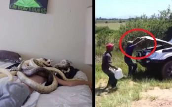 2 Φάρσες με φίδια που δεν θα ήθελες να σου κάνουν!