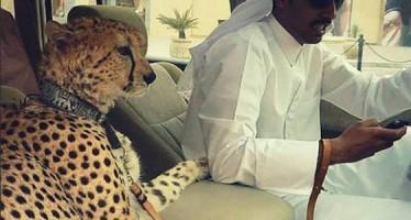 15+3 Περίεργα πράγματα που μπορείς να δεις στο Ντουμπάι!