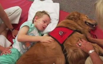 6χρονος σώθηκε χάρις στον τετράποδο «φίλο» του!