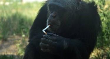 """5 Ζώα που """"αγαπούν"""" τα ναρκωτικά!"""