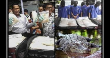 Ινδονησία: Αντικαθιστά τους φύλακες με κροκόδειλους! Δείτε γιατί..