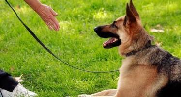 4 Εντολές για σκύλους και πως να τους τις μάθεις!