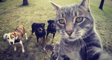 Αυτή η γάτα βγάζει καλύτερες selfies από εσένα!