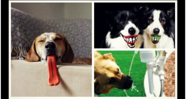 Τα 10 πιο περίεργα αξεσουάρ για σκύλους!