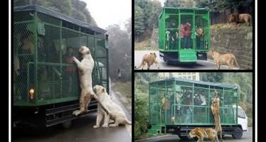 Κίνα: Έβαλαν τους επισκέπτες του ζωολογικού μέσα σε κλουβιά!
