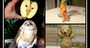 16 Αστείες εικόνες με φρούτα και λαχανικά!