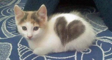 13 Γάτες με περίεργο τρίχωμα!