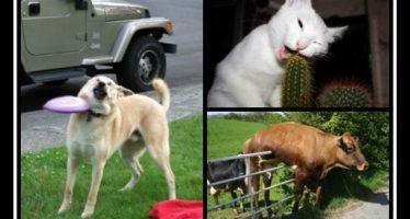 10 Αστείες εικόνες με ζώα που είχαν μια δύσκολη μέρα!