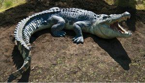 krokodilos xaraktiristika