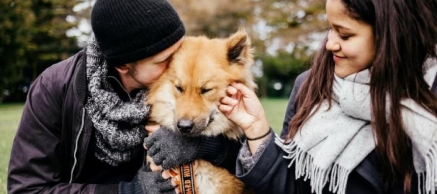 10 Περίεργα πράγματα που δεν ήξερες για τους σκύλους!