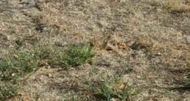 Εσύ μπορείς να βρεις το φίδι μέσα σε 5 δευτερόλεπτα;