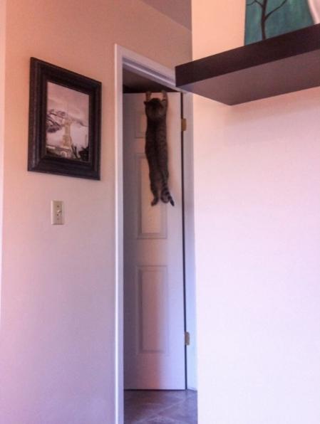 gata skarfaloma porta