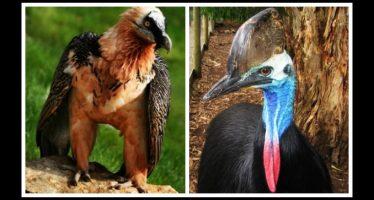Τα 10 πιο επικίνδυνα πτηνά στον κόσμο!
