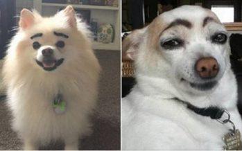 Πως θα ήταν οι σκύλοι αν είχαν έντονα φρύδια!