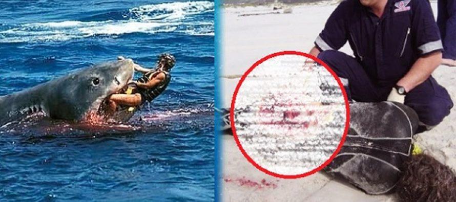 Οι 10 πιο τρομακτικές επιθέσεις από καρχαρία (Σκληρές εικόνες)