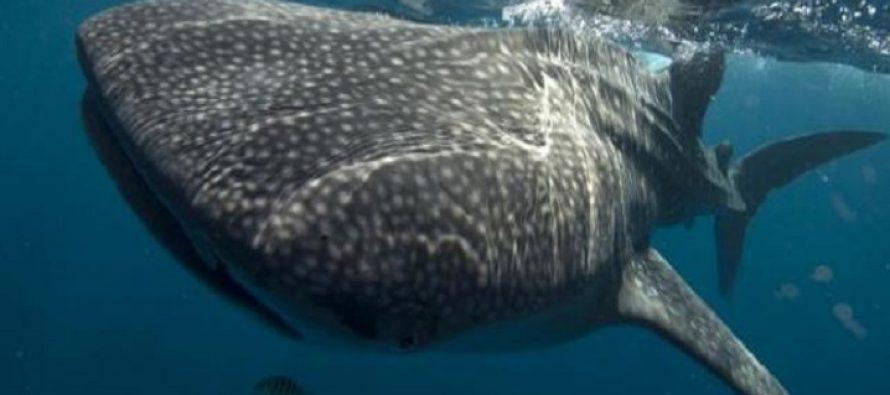 Τα 10 μεγαλύτερα ζώα του πλανήτη!