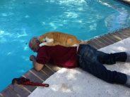 17 Γάτες που είναι ερωτευμένες με τα αφεντικά τους!