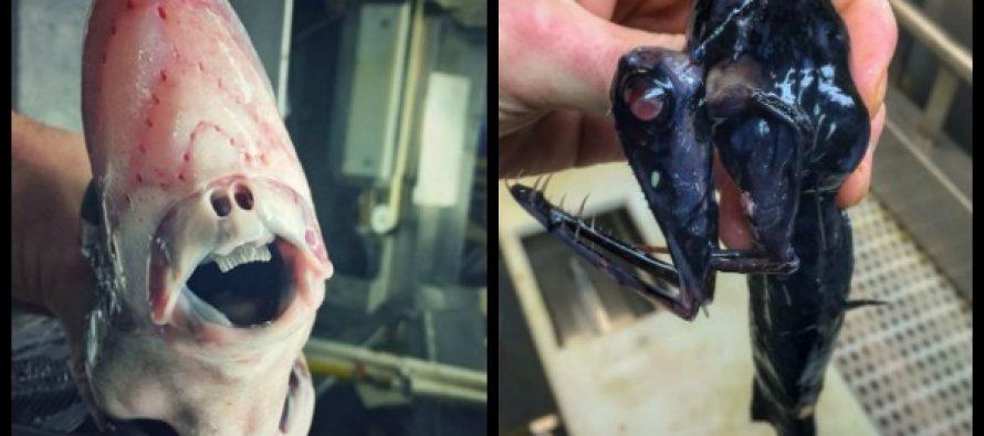 Ρώσος ψαράς πιάνει τα πιο περίεργα θαλάσσια πλάσματα!