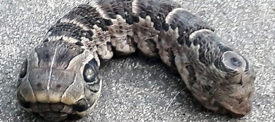 46χρονη από την Αργεντινή βρήκε δικέφαλη κάμπια που έμοιαζε με φίδι!