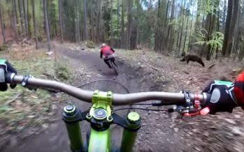 Αρκούδα κυνηγούσε ποδηλάτες όσο έκαναν κατάβαση στη Σλοβακία!