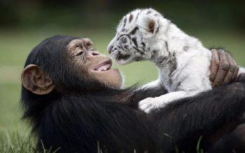 15 Από τις πιο ασυνήθιστες φιλίες ζώων που έχεις δει!