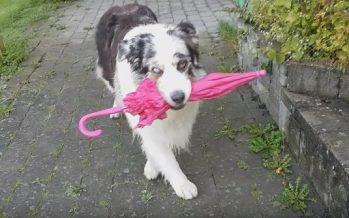 Απίστευτος σκύλος χορεύει με ομπρέλα στο στόμα!