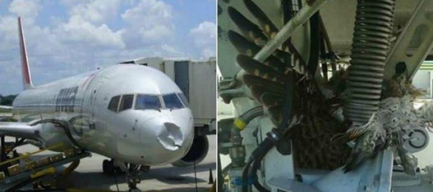 15 Φορές που ένα πουλί συγκρούστηκε με αεροπλάνο!
