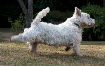 Γιατί τα σκυλιά τινάζουν τα πόδια τους αφού κάνουν την ανάγκη τους!