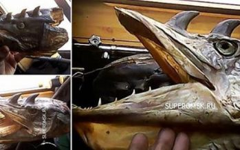 Βρέθηκαν μεταλλαγμένα ψάρια με κέρατα στη Ρωσία!