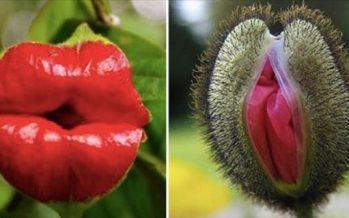 14 Περίεργα λουλούδια που μοιάζουν με κάτι εντελώς διαφορετικό!