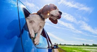 Γιατί βγάζει ο σκύλος σου το κεφάλι απ'το παράθυρο του αυτοκινήτου!
