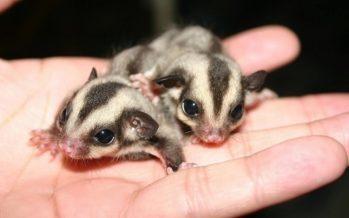 Τα 10 πιο γλυκά, νεογέννητα ζώα που θα κλέψουν την καρδιά σου!