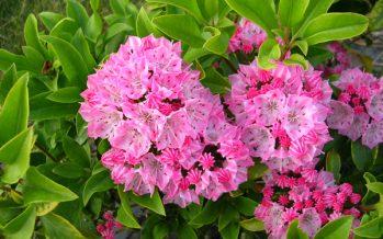 Αυτά είναι τα 10 πιο δηλητηριώδη φυτά του κόσμου!