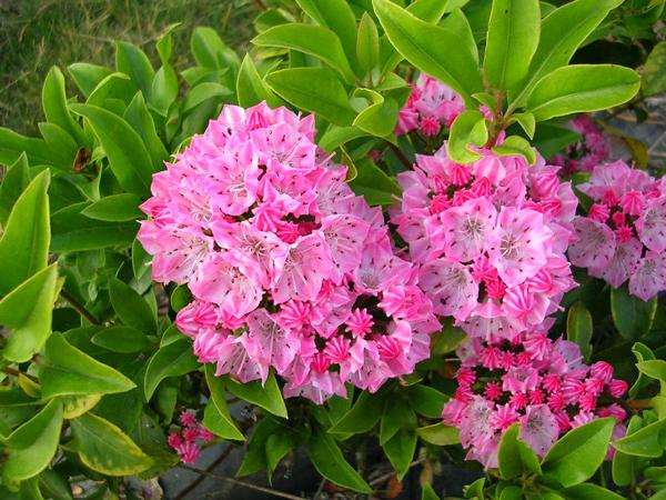 Αυτά είναι τα πιο δηλητηριώδη φυτά του κόσμου