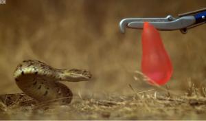 Επίθεση φιδιού σε slow motion που ανατριχιάζει (βίντεο)