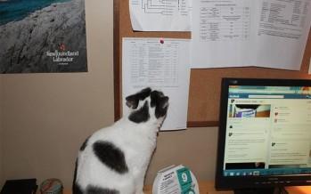 Μια απόδειξη πως πράγματι η γάτα σου σε μισεί!