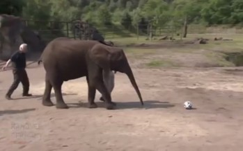 Ο ελέφαντας που κάνει ακριβείς προβλέψεις Mundial (video)